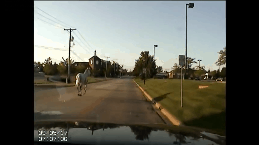 Screenshot of dashcam footage when police chased a horse that escaped in Wauconda.