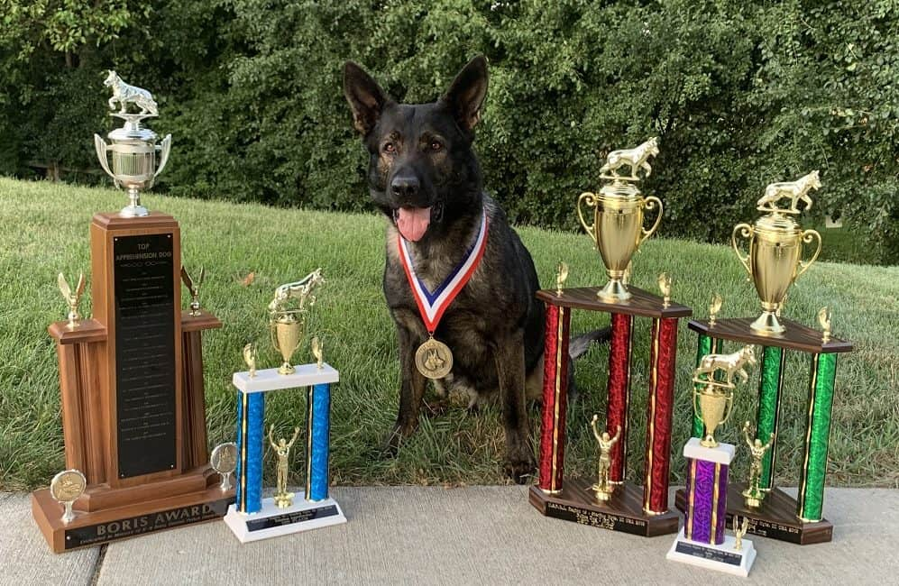 Lake County Canine Dax places top dog at competition, then finds missing suicidal man in Vernon Hills