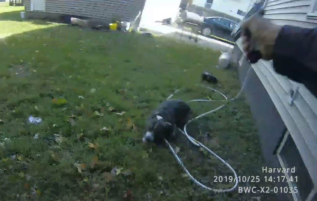 Bodycam released of Harvard police officer shooting dog