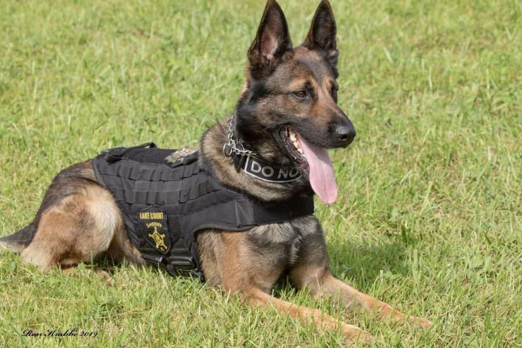 Police K-9 tracks down man armed with gun in Round Lake