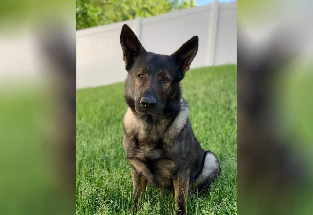 Sheriff's deputies, K-9 Dax find missing suicidal man in forest preserve near Ingleside