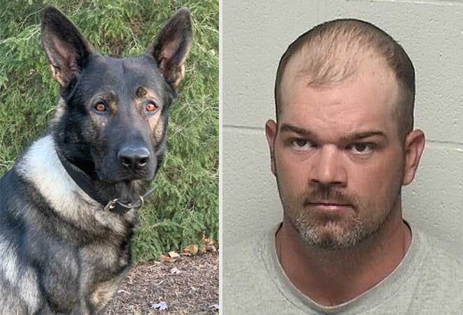 Lake County Sheriff K-9 Dax tracks down suspect in Vernon Hills