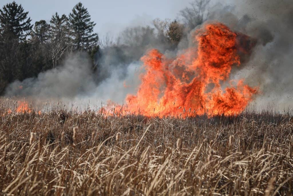 45 acres of brush burn during 'accidental fire' near Woodstock, officials say