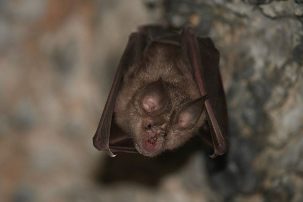 Rabid bat found inside young child's bedroom in Johnsburg, health officials say